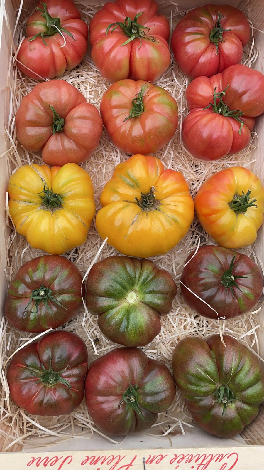 Tomate ancienne panachée Image